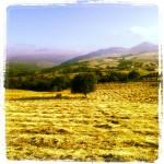 Asturias I.