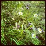 Naturaleza I.